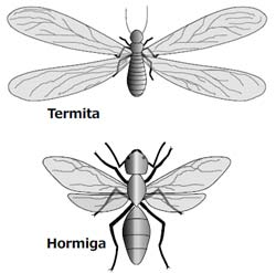 termita_hormiga