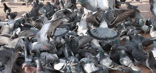 control de plagas ourense