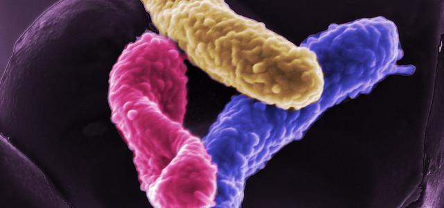 desinfección en Ourense