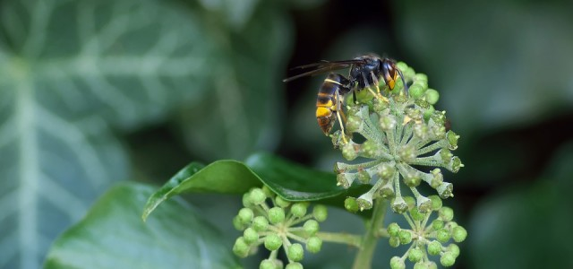 Eliminación de insectos