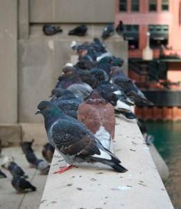 palomas-balcon